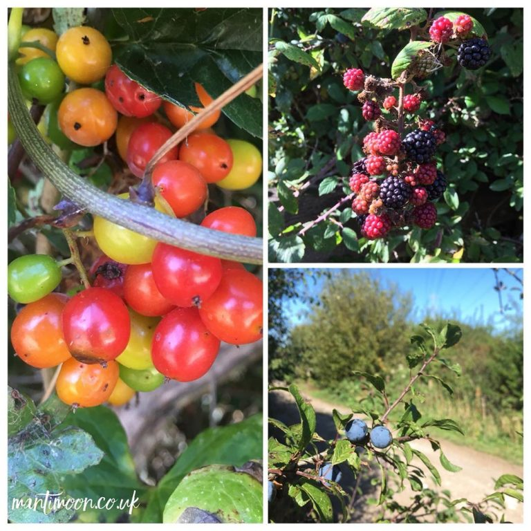 Photo of the week: a selection of different berries including blackberries in flourishing green hedgerows