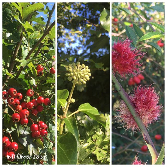 Photo of the week: Hedgerows in West Sussex