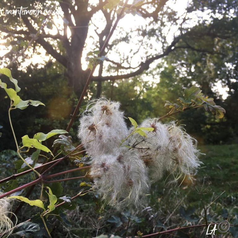 Photo of the week: Seed Heads in golden Autumnal light